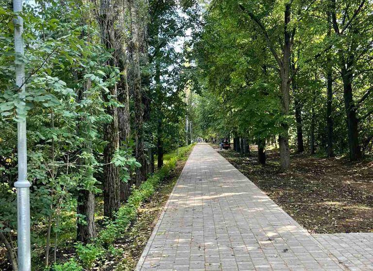 Пять тысяч деревьев и кустарников высадили в Советском районе Нижнего Новгорода - фото 1