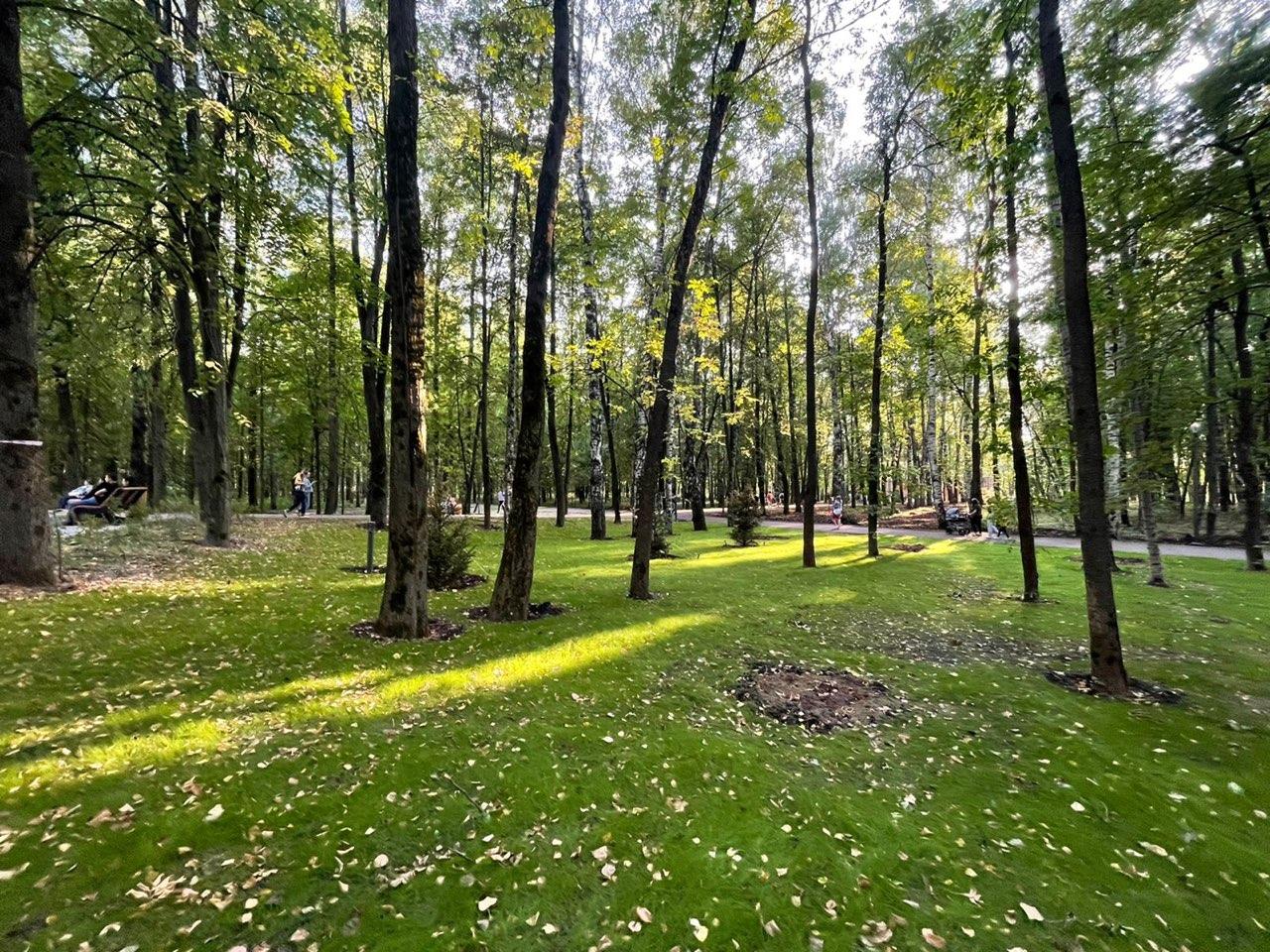 Более 400 деревьев высадят в Нижегородской «Швейцарии» в октябре - фото 1